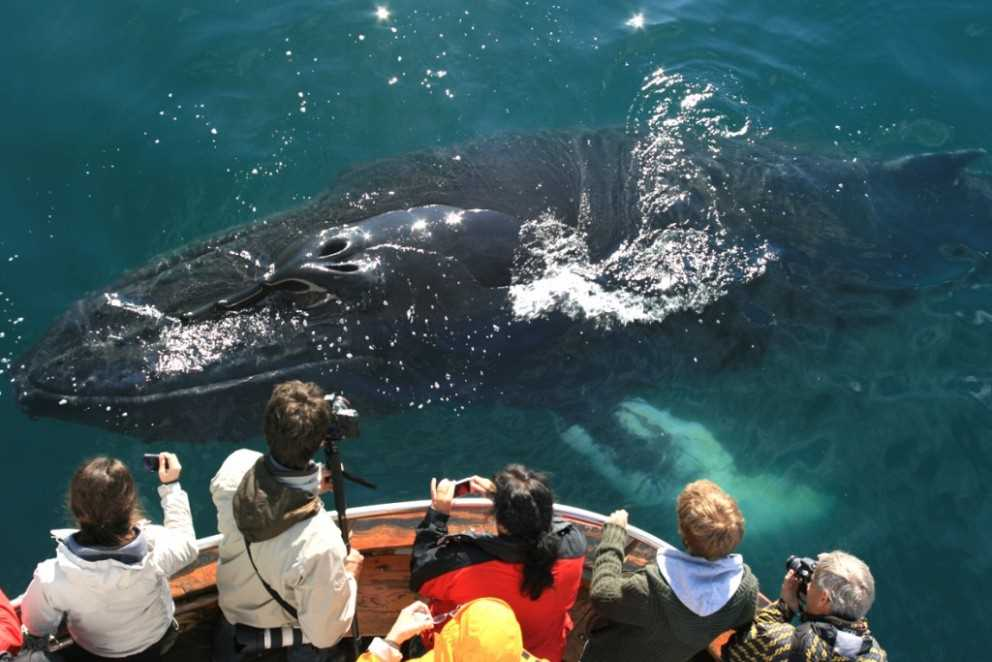 humpback whale watching iceland