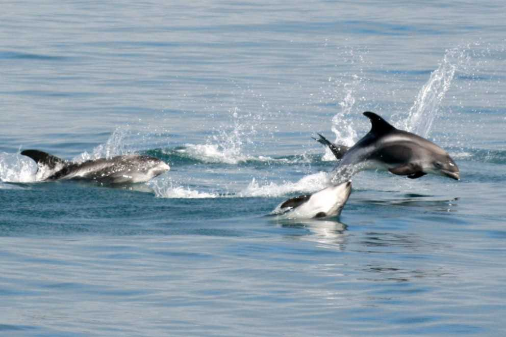 jumping dolphins seen on a tour
