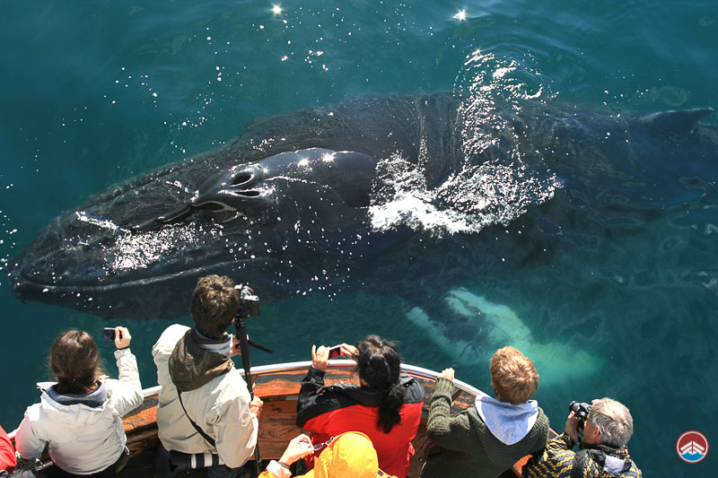 Whale Watching in Dalvik | North Iceland Tours | Arctic Sea Tours