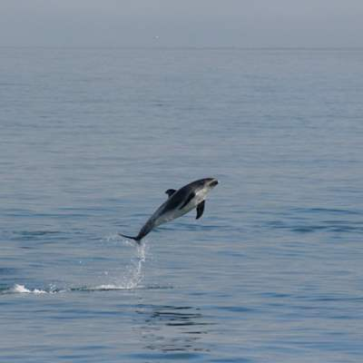 jumping dolphin on a whale watching tour
