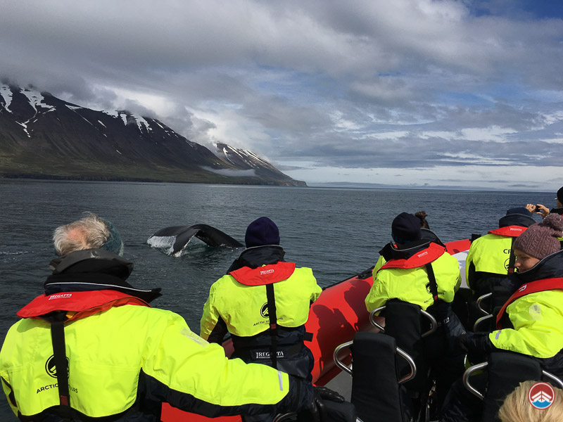Whale Watching Speed Boat Tour | North Iceland Tours | Arctic Sea Tours