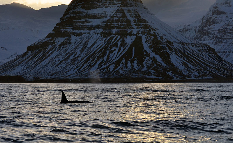 Kirkjufell Whale Watching | Whale Watching Tours Iceland
