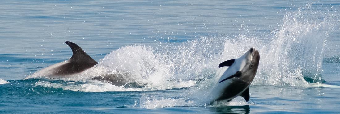 Excursion d'observation des baleines en Islande | Arctic Sea Tours