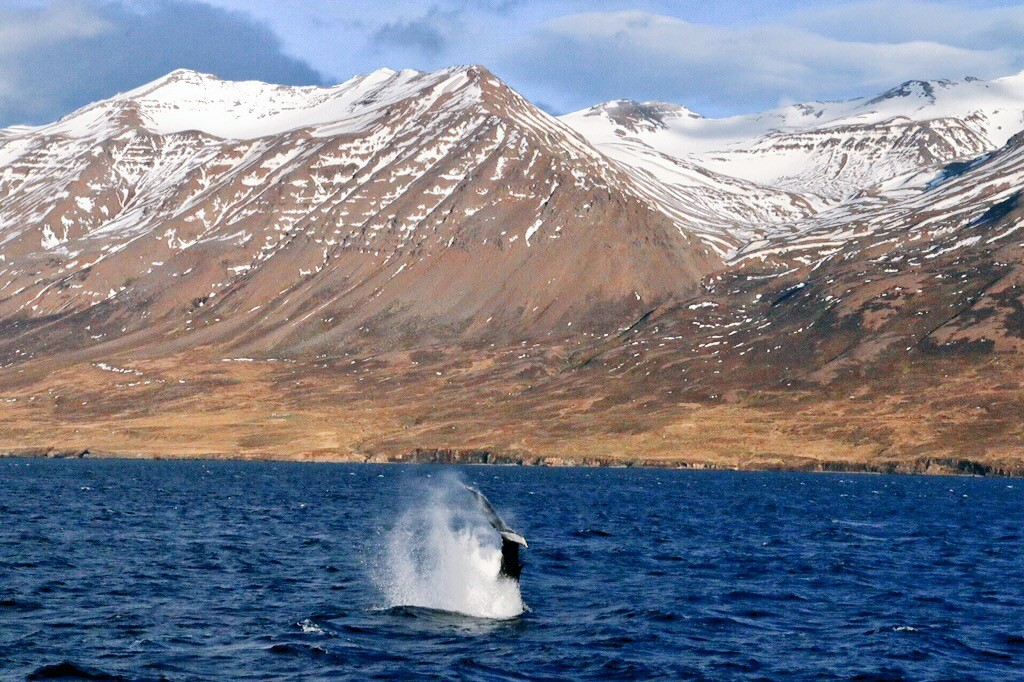 Great tours in November but few people on board | Arctic Sea Tours