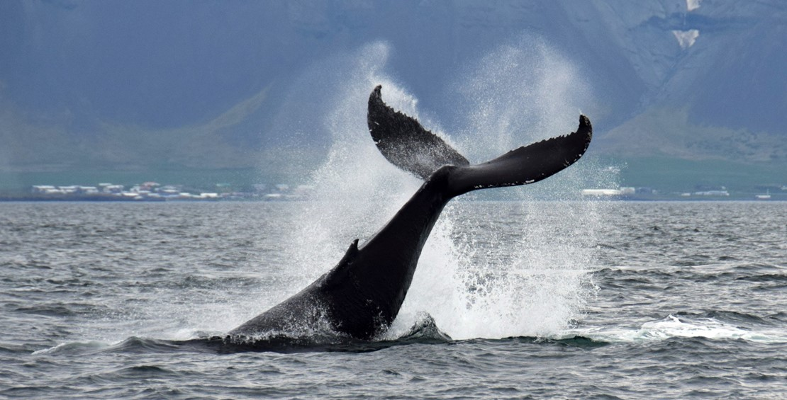 Still amazing tours, seeing humpback whales in all tours in sept