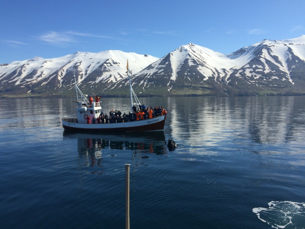 Great whale watching in june | Arctic Sea Tours