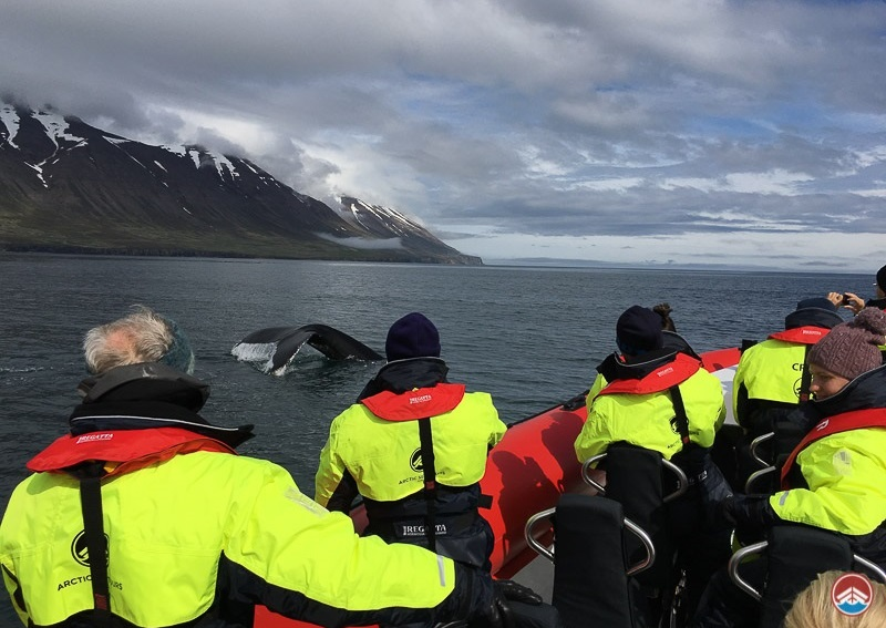 Whale Watching Speedboat Tour | North Iceland Tours | Arctic Sea Tours
