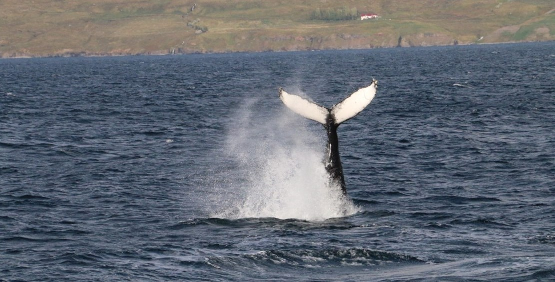Amazing whale watching 2015