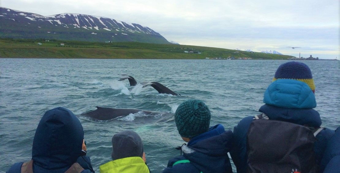 At least three humpback whales in all tours