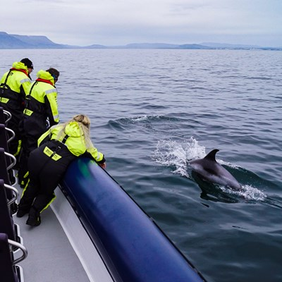 reykjavik excursion d'observation des baleines