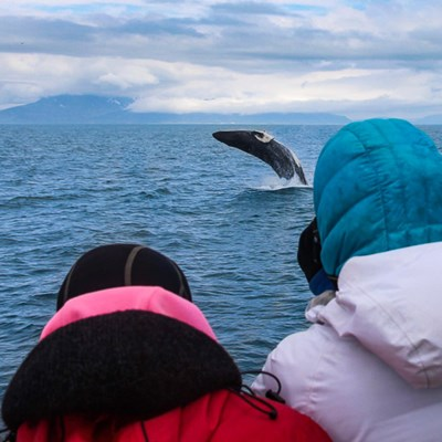 whale watching from reykjavik tour