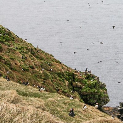 puffin paradise north iceland