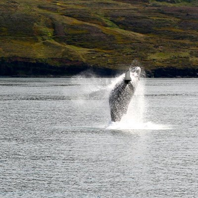 whales in iceland tour