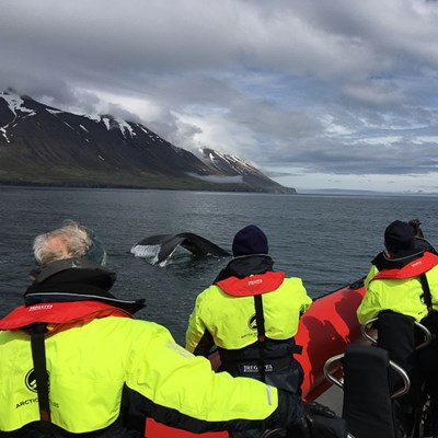 get up close with the rib express whale watching tour