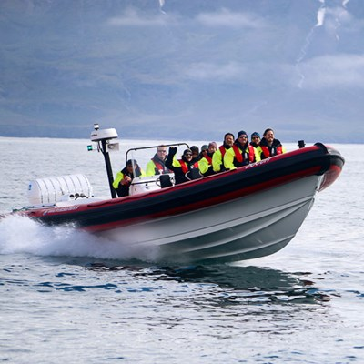 whale watching dalvik video