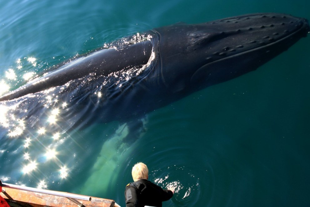 get real close on the whale watching tour