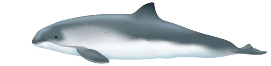 The white sided dolphin