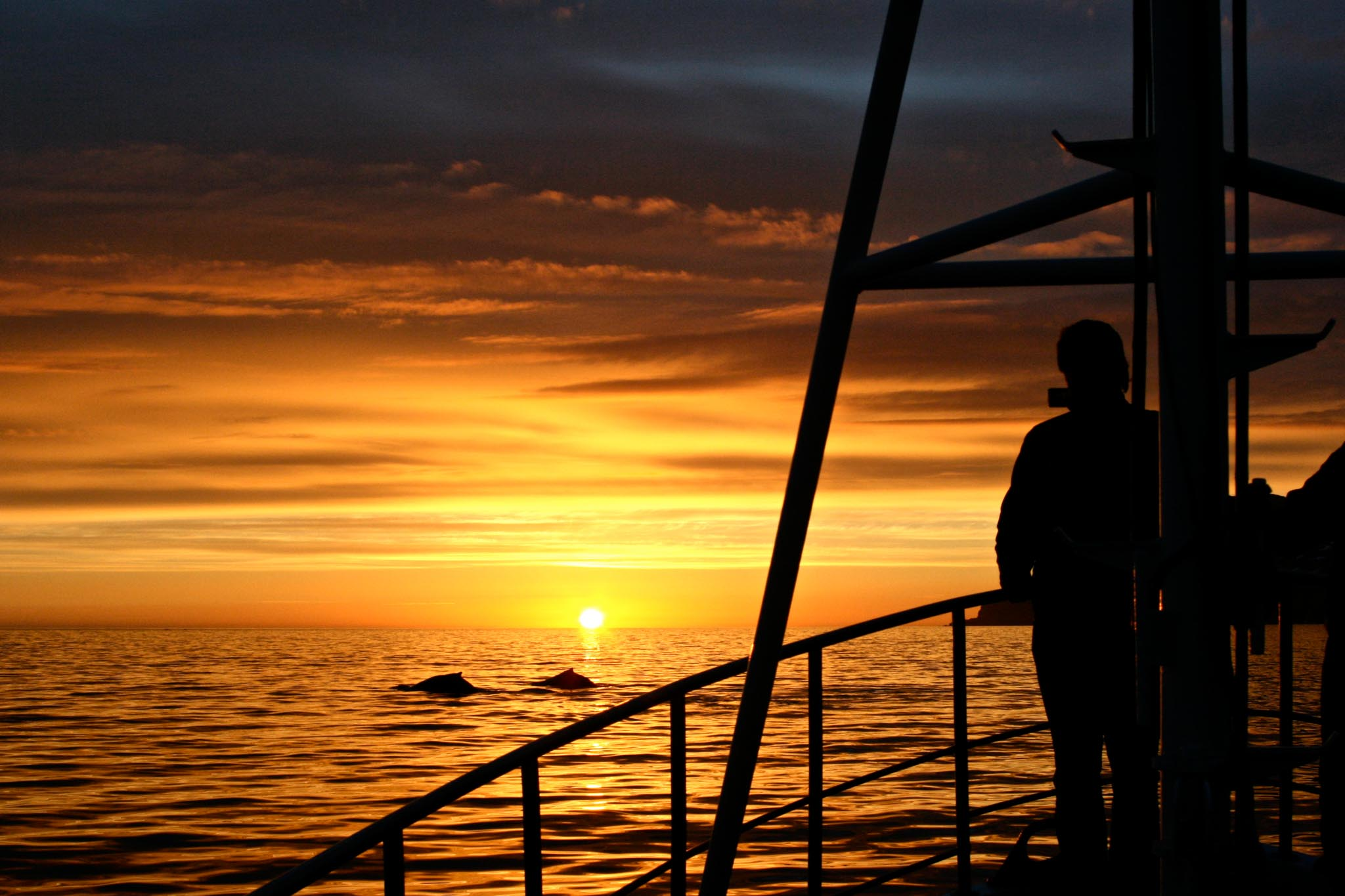 Midnight Sun Whale Watching North Iceland tours Arctic Sea Tours